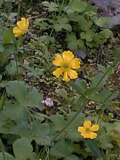 沖縄・那覇で見つけた草花たち