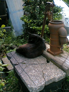 井戸の上の猫