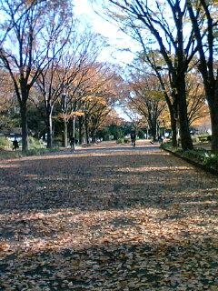 紅葉の隣りに桜