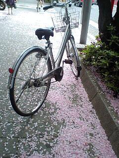 桜、また来年